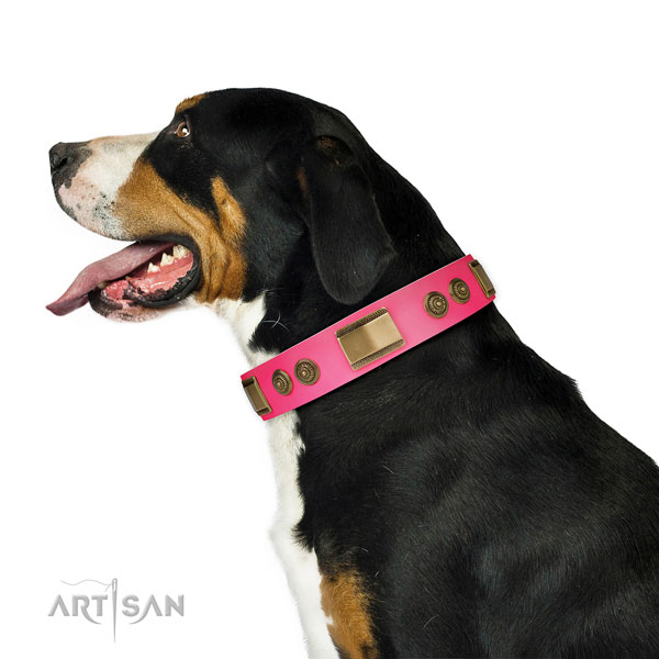 Swiss Mountain Dog comfortable wearing dog collar of soft natural leather