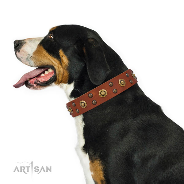 Swiss Mountain Dog fancy walking dog collar of remarkable quality genuine leather