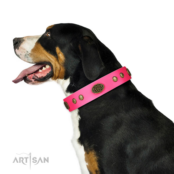 Swiss Mountain Dog basic training dog collar of designer genuine leather