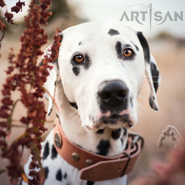 Tan Leather Decorated Collar Crafted for Lio Dalmatian