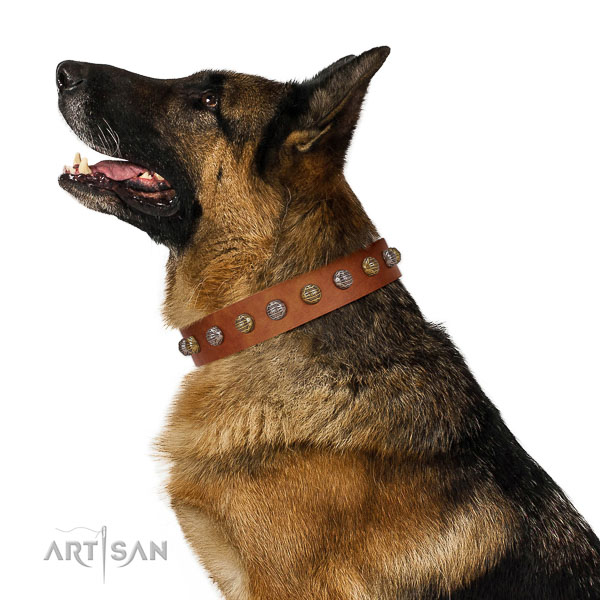 Best quality German Shepherd collar designed by FDT Artisan