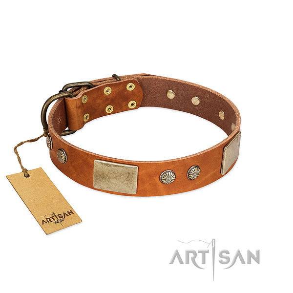 Chic Leather Dog Collar Adorned with Plates and Studs
