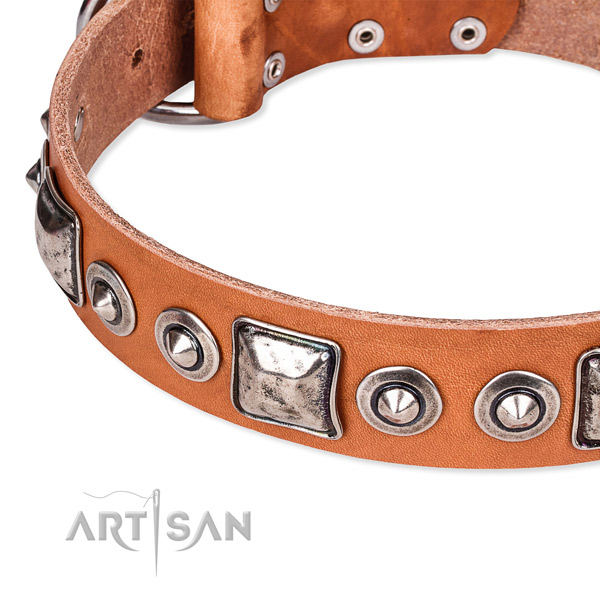 Tan leather dog collar with firmly riveted fittings