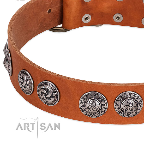 Tan leather dog collar with firmly riveted decorations