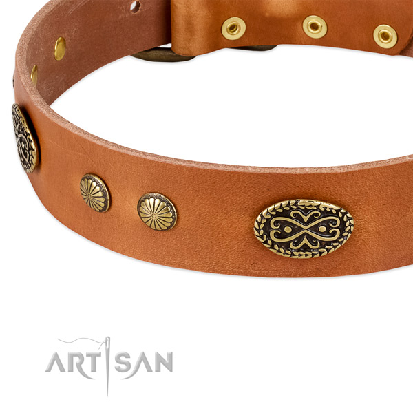 Comfortable tan leather dog collar with decorations