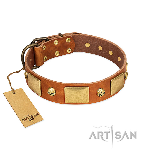 Marvelous Leather Dog Collar with Riveted Decorations