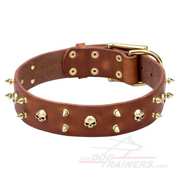 Dog collar with shiny brass adornment
