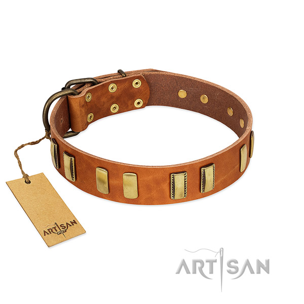 Tan leather dog collar for comfortable daily walks