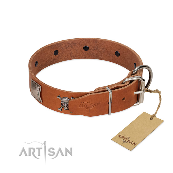 Reliable in Use Dog Collar for Walks