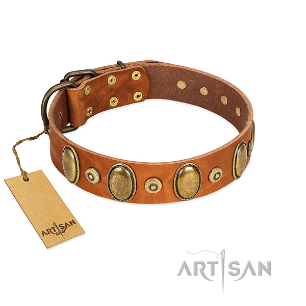 Premium Quality Tan Leather Collar with Royal