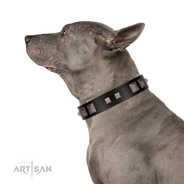 Extraordinary walking black leather Thai Ridgeback collar of premium quality