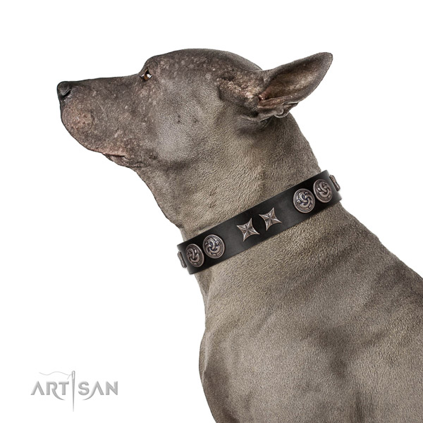 Extraordinary walking black leather Thai Ridgeback collar