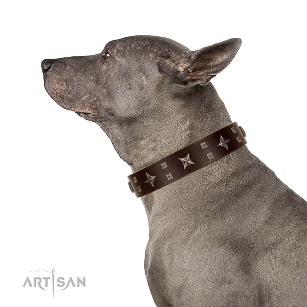 Extraordinary walking bkack leather Thai Ridgeback collar with cook decorations
