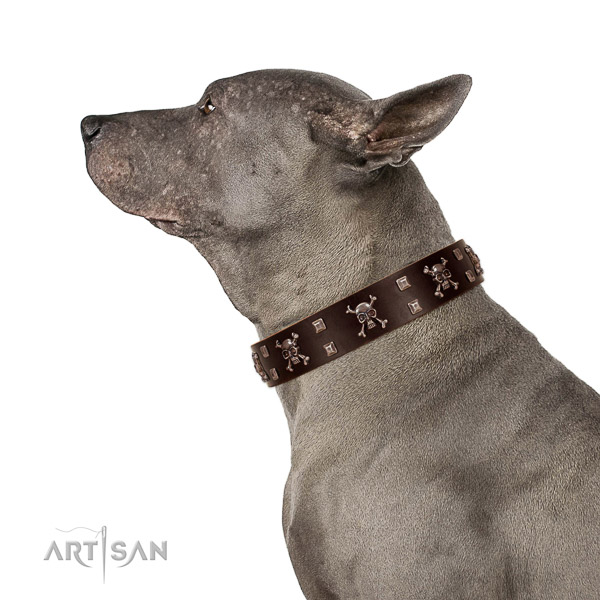 FDT Artisan brown leather Thai Ridgeback collar for sharp