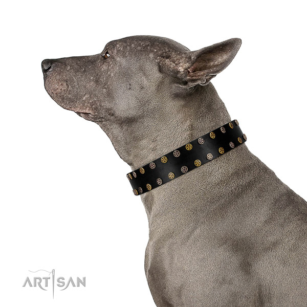 Thai-Ridgeback Collar of Dog-friendly Leather