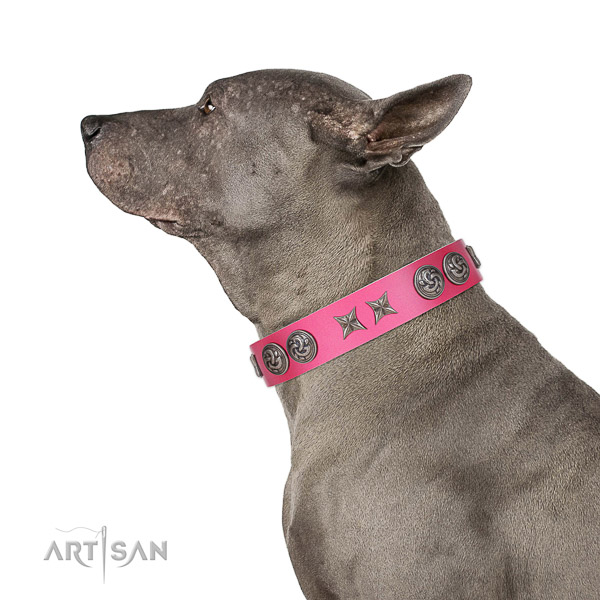 Extraordinary walking pink leather Thai Ridgeback collar