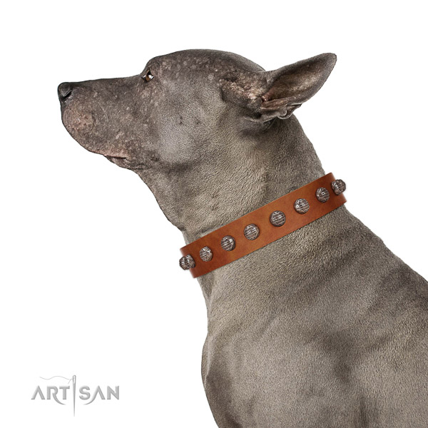 Extraordinary walking tan leather Thai Ridgeback collar