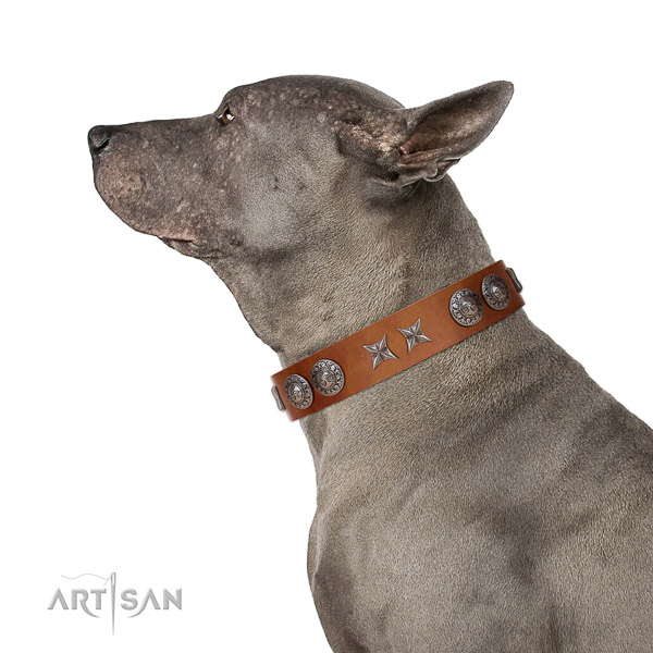 Extraordinary walking tan leather Thai Ridgeback collar with chic decorations
