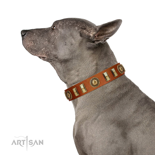 Natural Leather Thai Ridgeback Collar with Incredible Adornments