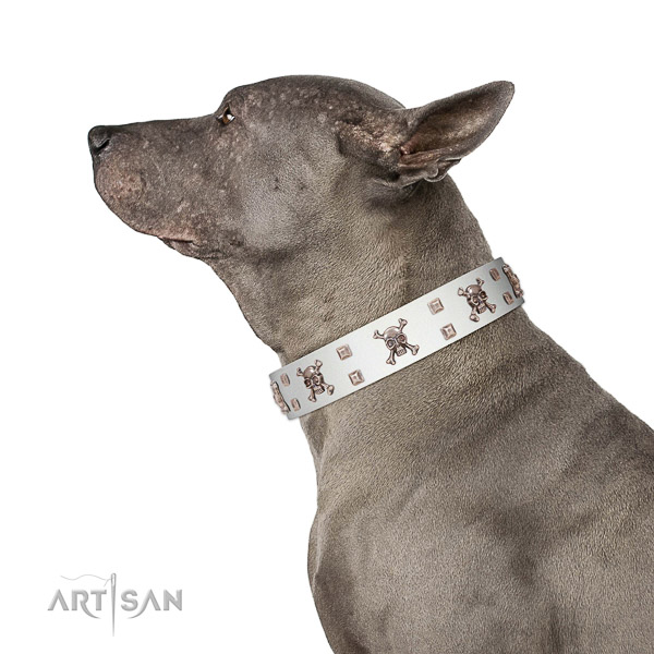 High-quality walking white leather Thai Ridgeback collar