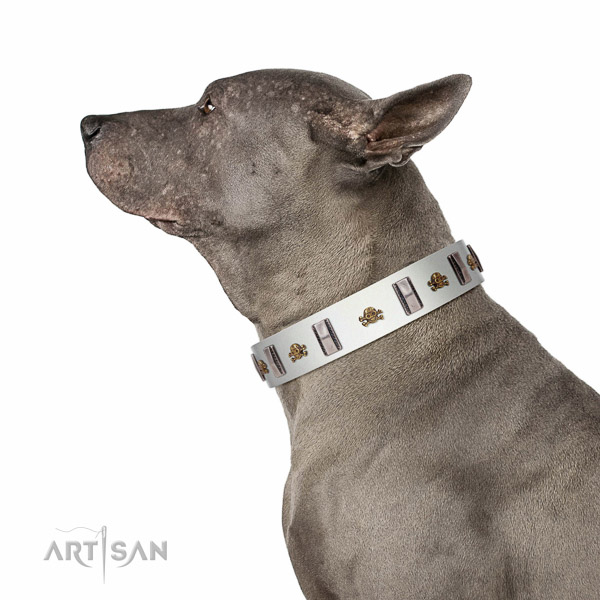 Extraordinary walking white leather Thai Ridgeback collar with chic decorations