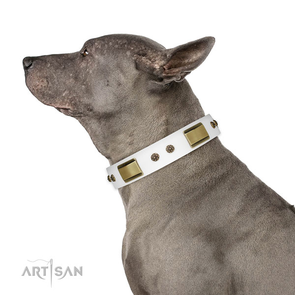 Thai Ridgeback handy use dog collar of fashionable leather