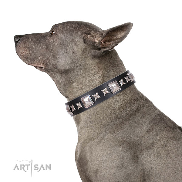Thai Ridgeback inimitable full grain genuine leather dog collar with embellishments