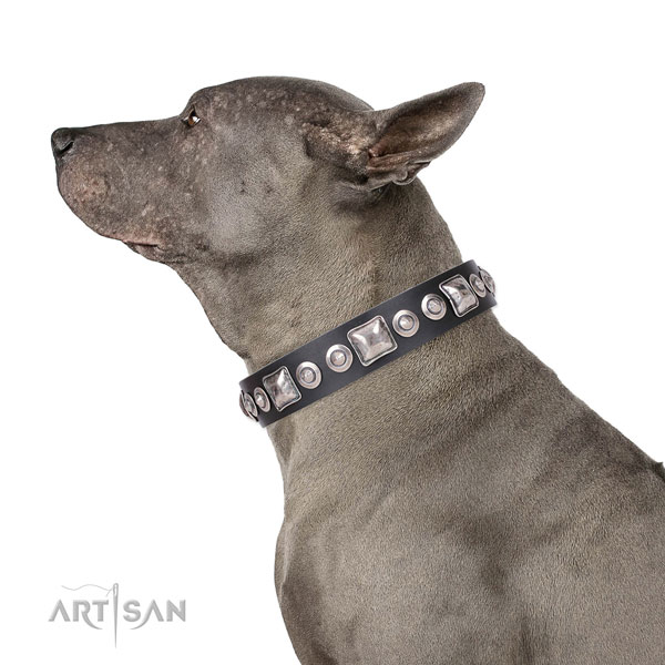 Thai Ridgeback amazing full grain leather dog collar with decorations