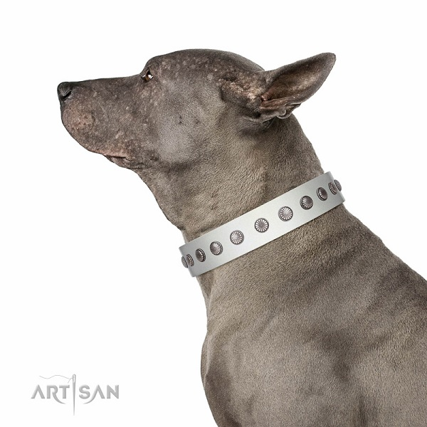 Fabulous walking white leather Thai Ridgerback collar with chic decorations