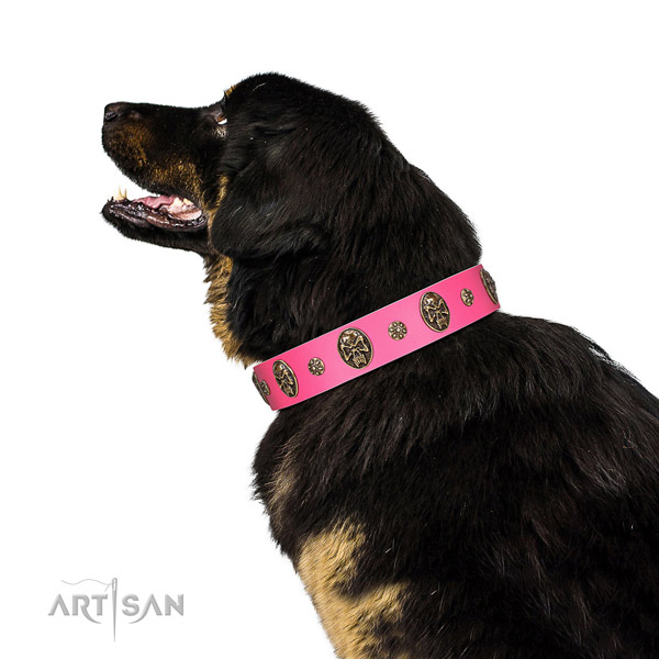 Pink Leather Tibetian Mastiff Collar for Awesome Look
