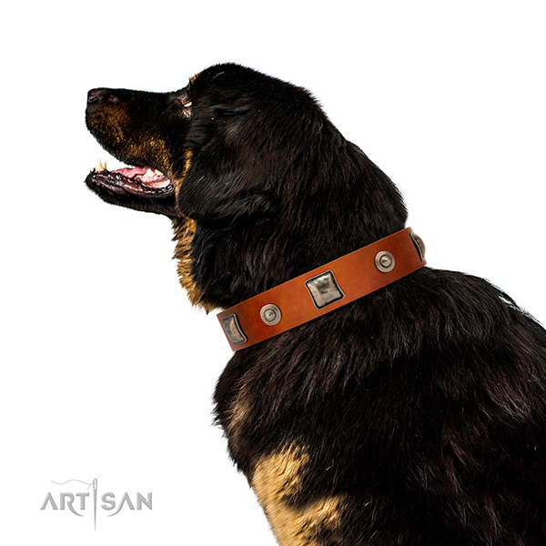 Extraordinary walking leather Tibetan Mastiff collar with decorations