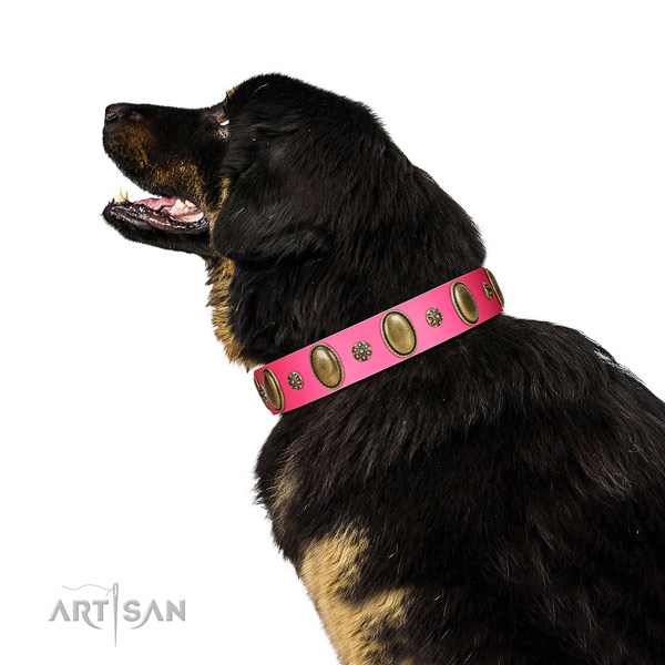 Pink Tibetian Mastiff Artisan leather collar for elegant look