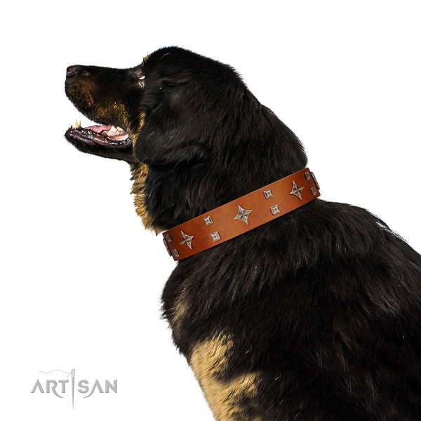Deluxe leather Tibetan Mastiff collar for better handling