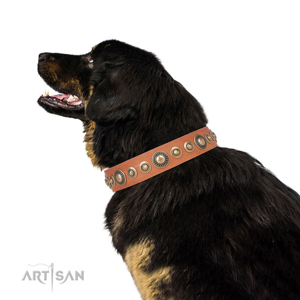 Tibetian Mastiff extraordinary full grain natural leather dog collar with decorations