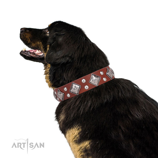 Tibetian Mastiff significant genuine leather dog collar with adornments