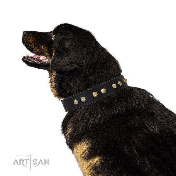 Tibetian Mastiff everyday walking dog collar of remarkable quality natural leather
