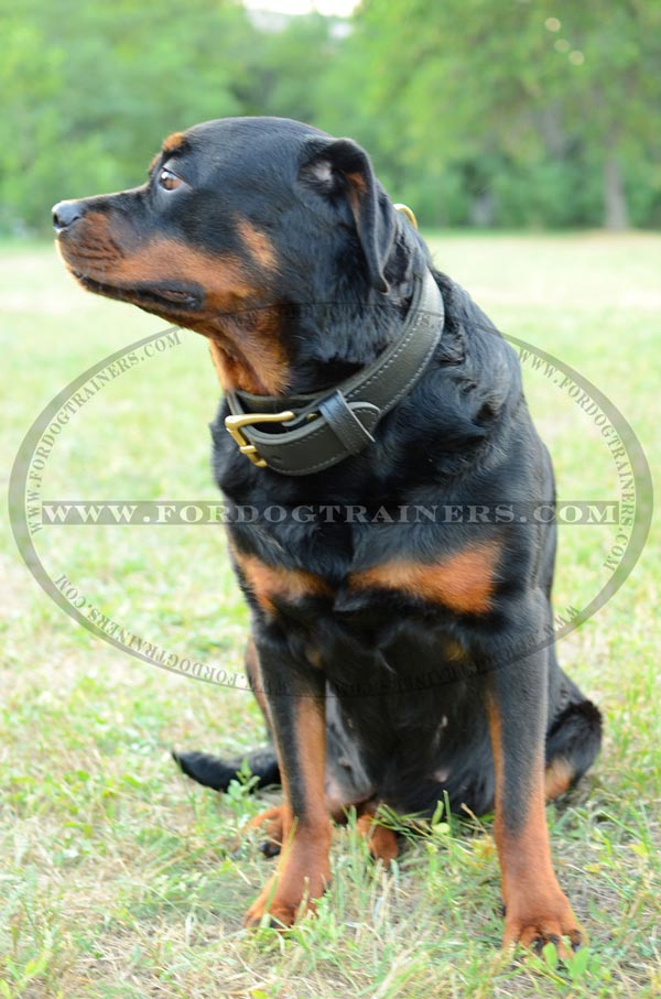 Leather dog collar equipped with fur saving tip