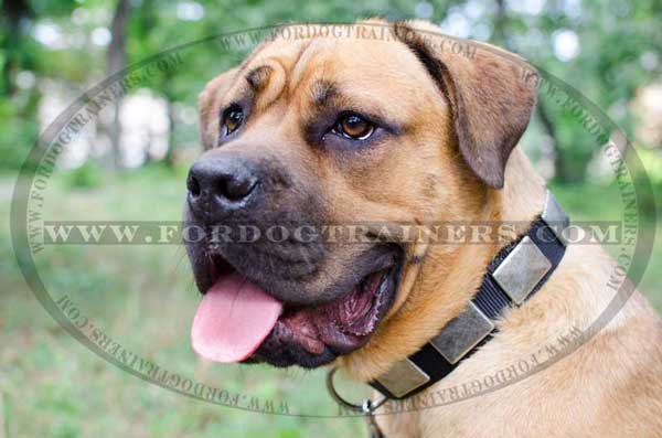 Nylon Cane Corso Training Collar