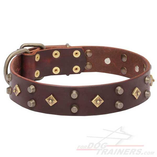 Walking Leather Dog Collar with riveted decorations