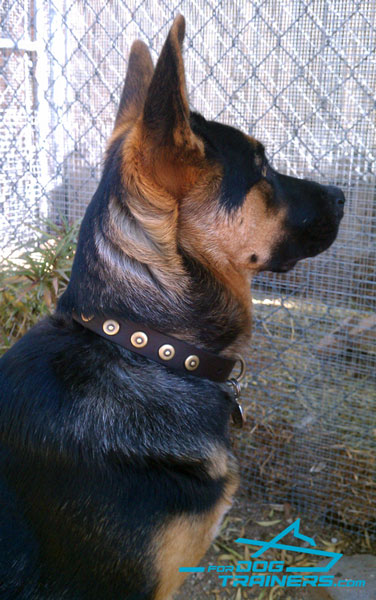 Leather German Shepherd Collar Adorned with Circles
