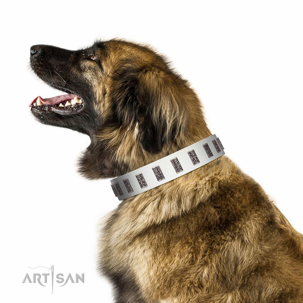 Deluxe walking  white leather Leonberger collar with