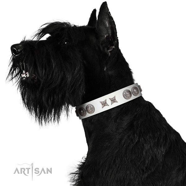 Royal Riesenschnauzer Collar of Genuine Leather and Chrome-plated Hardware