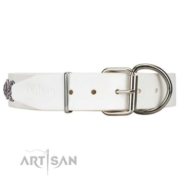 White leather dog collar with a traditional buckle for reliable fastening