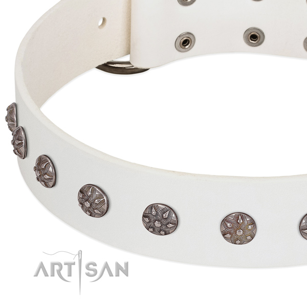 White leather dog collar with vintage studs covered with chromium