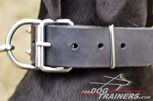 Nickel D-ring and buckle for leather Doberman collar