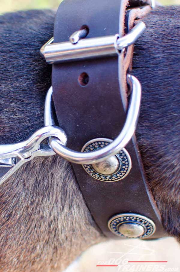 Rust resistant nickel fittings for leather Pitbull collar