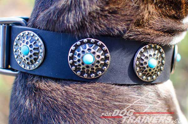 Wide leather Pitbull collar with silver conchos and blue stones
