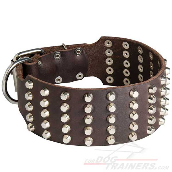 Wide leather dog collar with 5 rows of evenly set studs