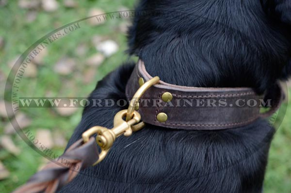 Dog collar with brass hardware
