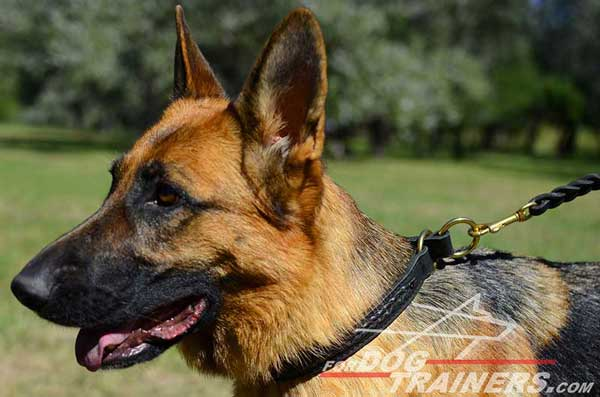 Leather Choke Dog Collar Braided Ideal for Behavior Correction In GSD